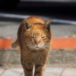 便利ズームレンズで江ノ島の猫を撮影
