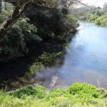 青く透き通る水!柿田川公園へ行ってきた
