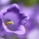 マクロ撮影の練習で花を撮ってきた