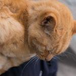江ノ島で猫と戯れる
