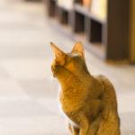 猫カフェとアキバ散策