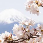 富士五湖さくらツーリング
