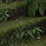 鎌倉「苔の階段」・横須賀「ポテチパン」プチツーリング