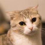 新宿の猫カフェ「きゃりこ」へ行って来た