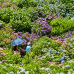 伊豆・紫陽花ツーリング