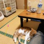 猫と泊まれる「まいきゃっと」へ行って来た。・・・けど