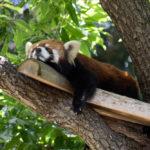 市営で無料の動物園「野毛山動物園」へ行ってきた。