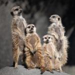 羽村市動物公園へ初めて行ってきた!