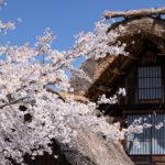 桜が咲く春の白川郷ツーリング2日目